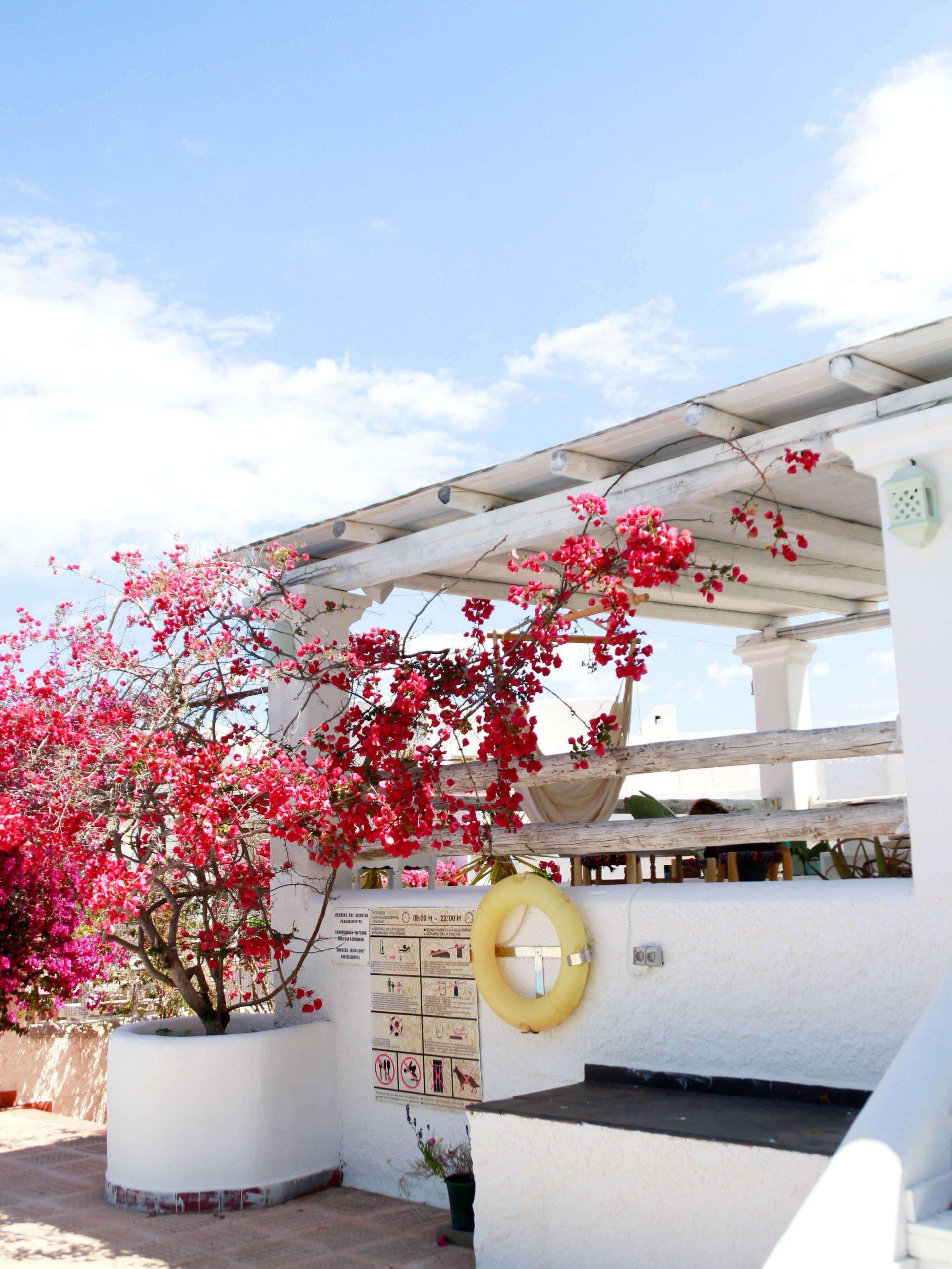 Hambre Ibiza